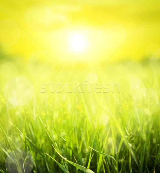 Absztrakt nyár virág fű természet levél Stock fotó © Konstanttin