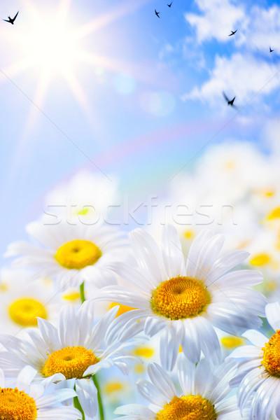 art floral spring or summer background Stock photo © Konstanttin