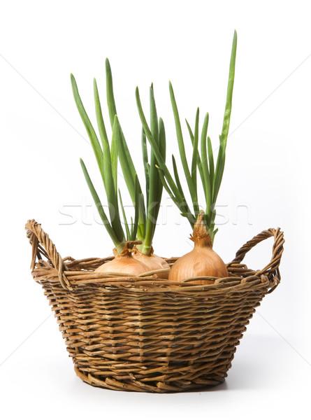 Művészet újhagyma növekvő kosár étel természet Stock fotó © Konstanttin