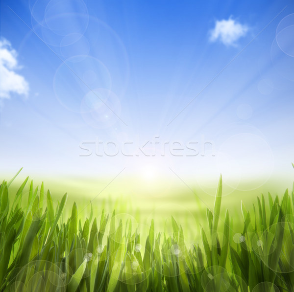 art abstract Spring nature background of spring grass and sky Stock photo © Konstanttin