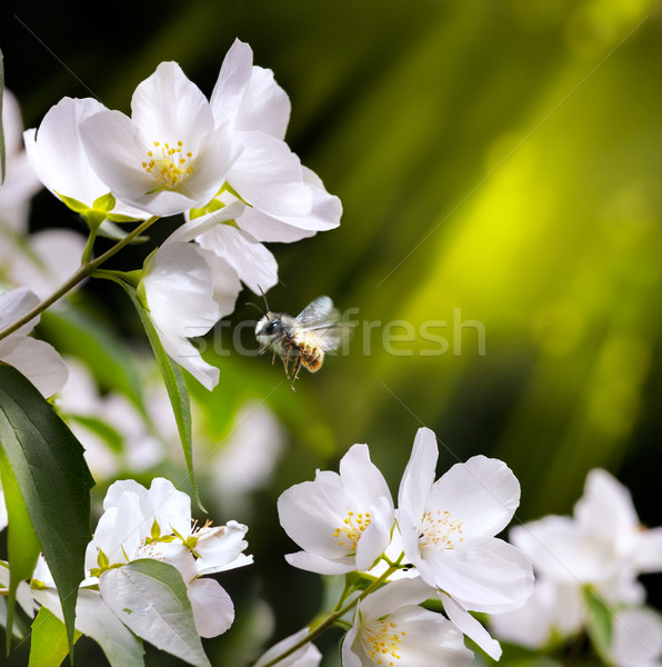 art spring flowers background with flying bee Stock photo © Konstanttin