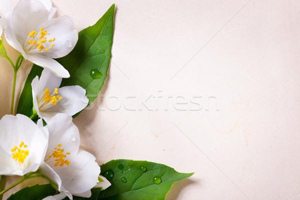 jasmine spring flowers  on old paper background Stock photo © Konstanttin