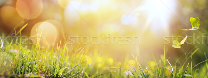 art abstract spring background or summer background with fresh g Stock photo © Konstanttin