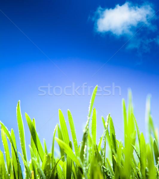 Soyut sabah çiy çim bahar doğal Stok fotoğraf © Konstanttin