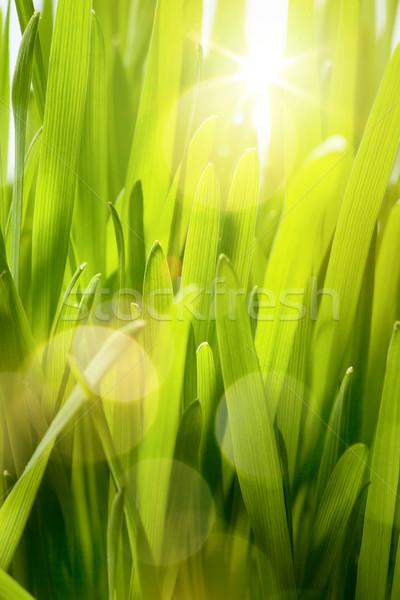 Természetes tavasz zöld művészet absztrakt nyár Stock fotó © Konstanttin