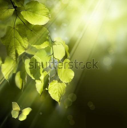 Stock photo: art butterfly on spring leaves