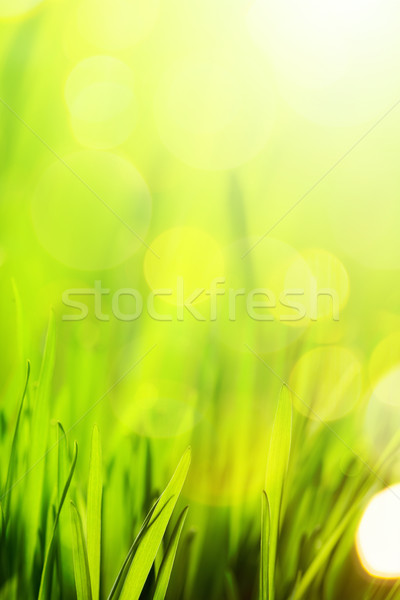 art abstract nature spring or summer background  Stock photo © Konstanttin