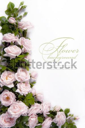 Art flower Background for greeting card Stock photo © Konstanttin
