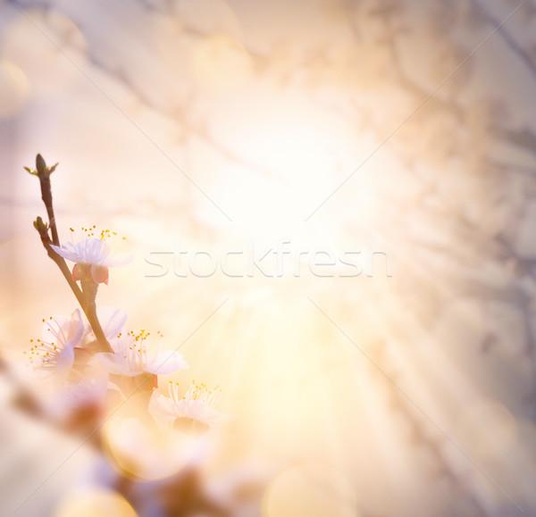 Spring flower background; Easter landscape Stock photo © Konstanttin