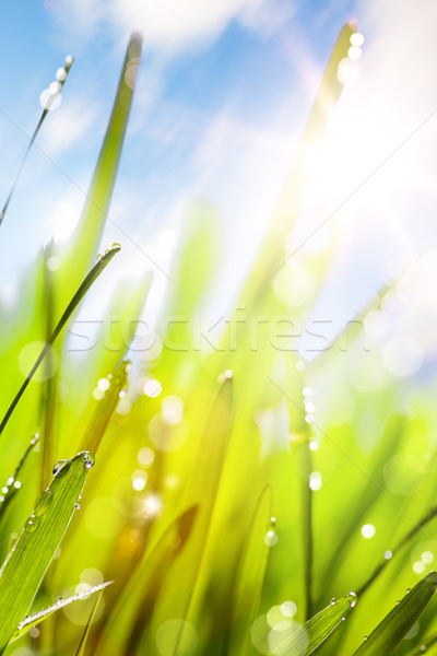Spring abstract nature background Stock photo © Konstanttin