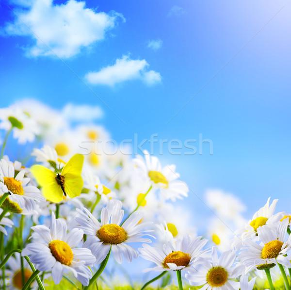 Tavasz tavaszi háttér kék ég húsvét égbolt virág Stock fotó © Konstanttin