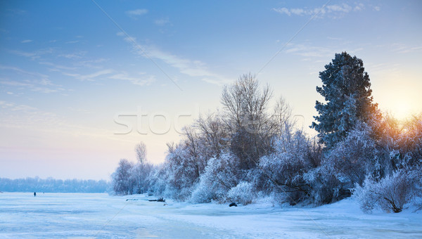 art beautiful winter background; winter landscape On A Hoar Fros Stock photo © Konstanttin