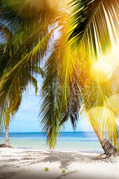 Zomer tropisch strand vreedzaam vakantie zon achtergrond Stockfoto © Konstanttin