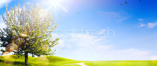 art Spring landscape; Easter background with blooming spring tre Stock photo © Konstanttin