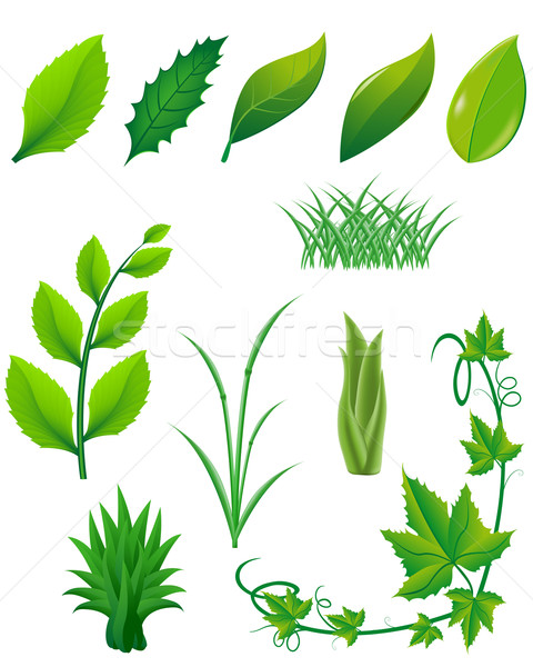icon set of green leaves and plants for design Stock photo © konturvid
