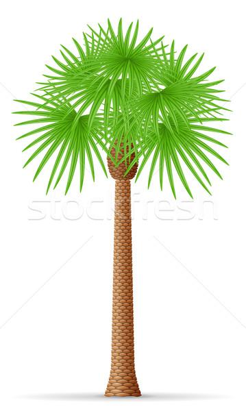 Palmeira isolado branco folha fundo beleza Foto stock © konturvid