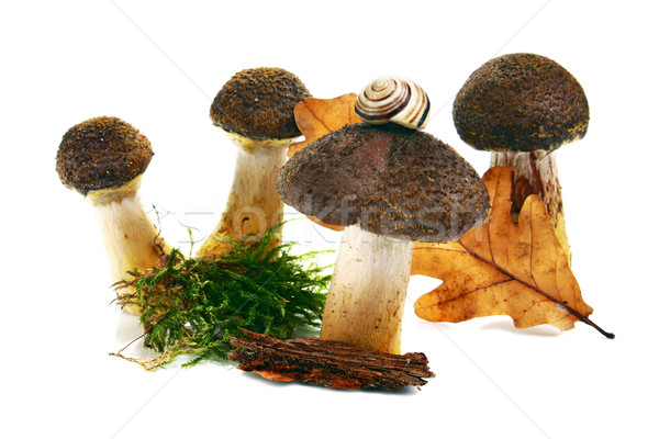 mushrooms Stock photo © konturvid