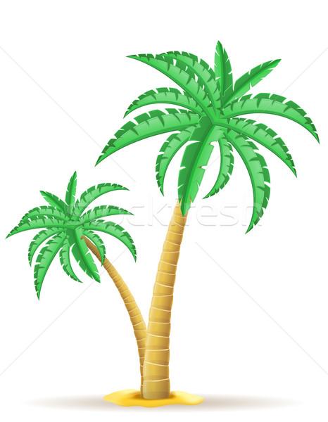 Photo stock: Palmier · isolé · blanche · feuille · fond · beauté