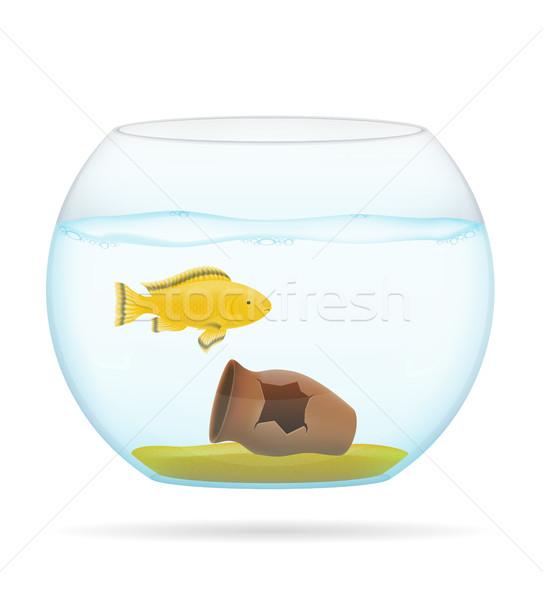 Fisch transparent Aquarium isoliert weiß Meer Stock foto © konturvid