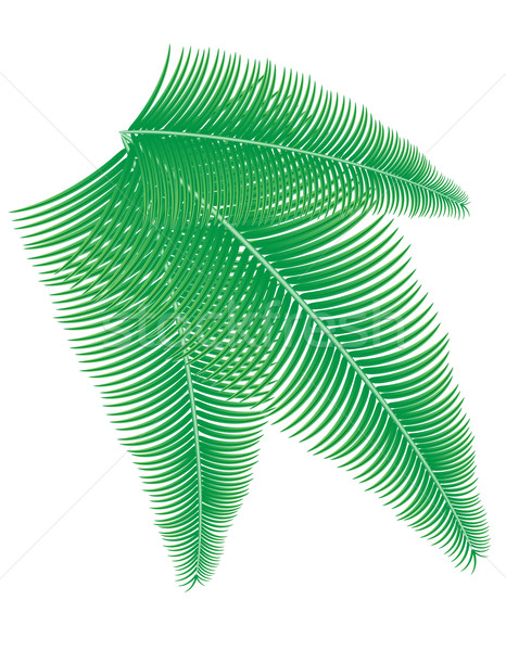 palm branch vector illustration Stock photo © konturvid