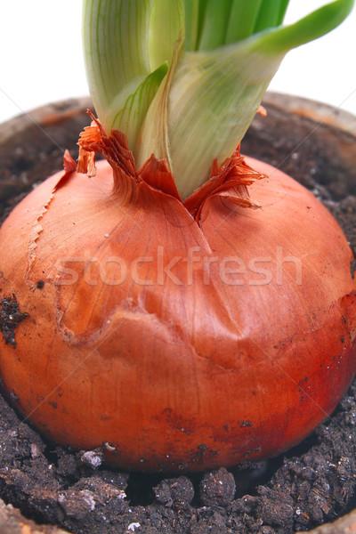 Zöldhagyma egészséges zöldség izolált fehér étel Stock fotó © konturvid
