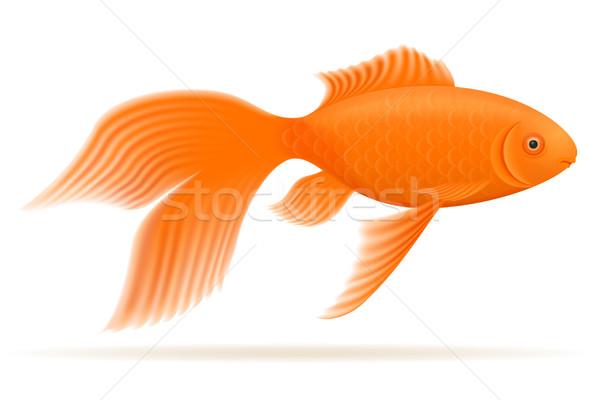 ストックフォト: 水族館 · 魚 · 孤立した · 白 · 自然 · 美