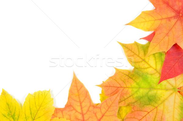 Stock fotó: őszi · levelek · izolált · fehér · narancs · ősz · színek