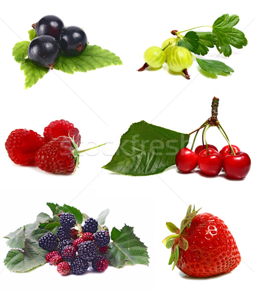 Baies isolé blanche nature fruits fond Photo stock © konturvid
