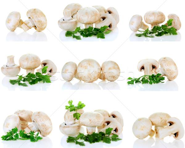 Champignon mantar maydanoz yalıtılmış beyaz yeşil Stok fotoğraf © konturvid
