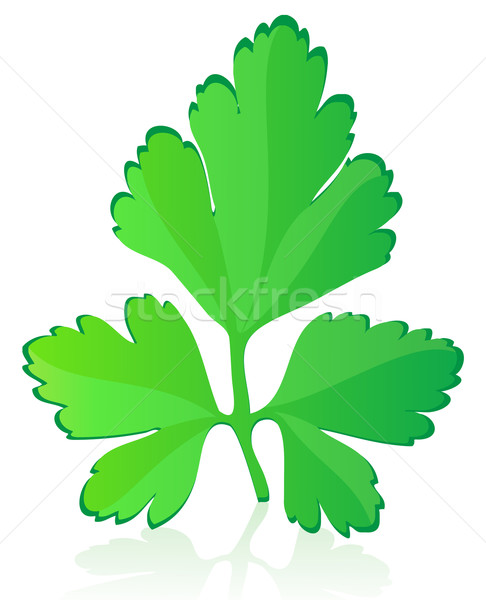 parsley vector illustration Stock photo © konturvid