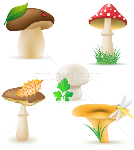 set icons mushrooms vector illustration Stock photo © konturvid