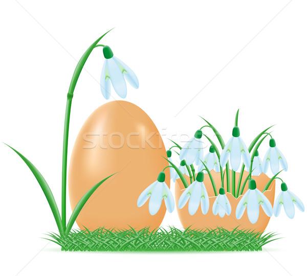 Foto stock: Huevo · Shell · aislado · blanco · flor · alimentos