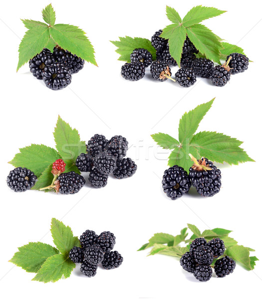 ripe blackberry with green leaves Stock photo © konturvid