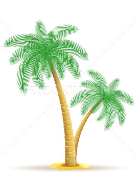 palm tree vector illustration Stock photo © konturvid
