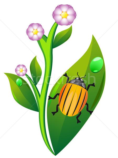 colorado beetle on leaf potato Stock photo © konturvid