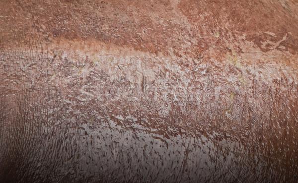 texture of wet hippo skin Stock photo © koratmember