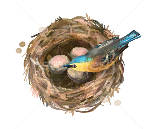 Bird at Nest Stock photo © kostins