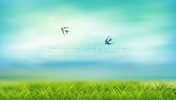 Summer Landscape Vector Stock photo © kostins