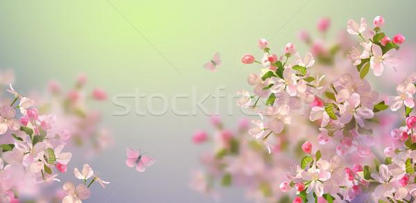 Bahar kiraz çiçeği vektör sakura şube bahar Stok fotoğraf © kostins