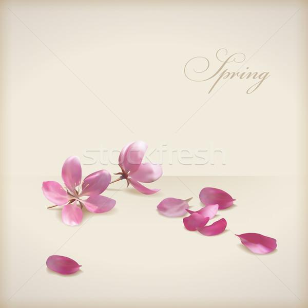 Foto stock: Floral · vetor · flor · de · cereja · flores · primavera · projeto