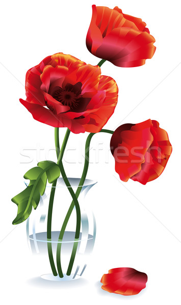 Flower Poppy Stock photo © kostins