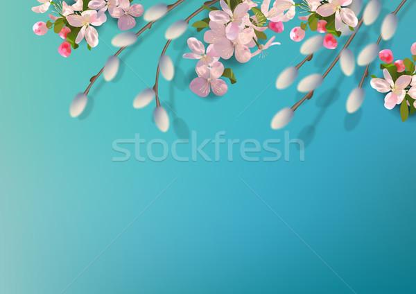 Primavera vetor bichano salgueiro maçã Foto stock © kostins