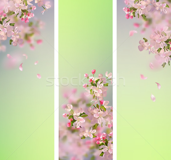 Stock photo: Spring Cherry Blossom