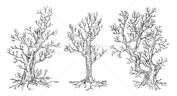 Set of hand drawn trees Stock photo © kostins