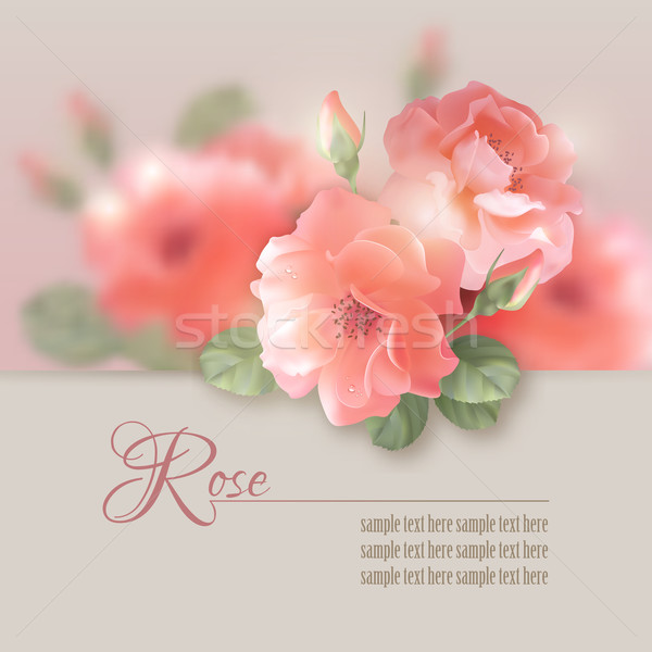 Card with vector flowers roses  Stock photo © kostins