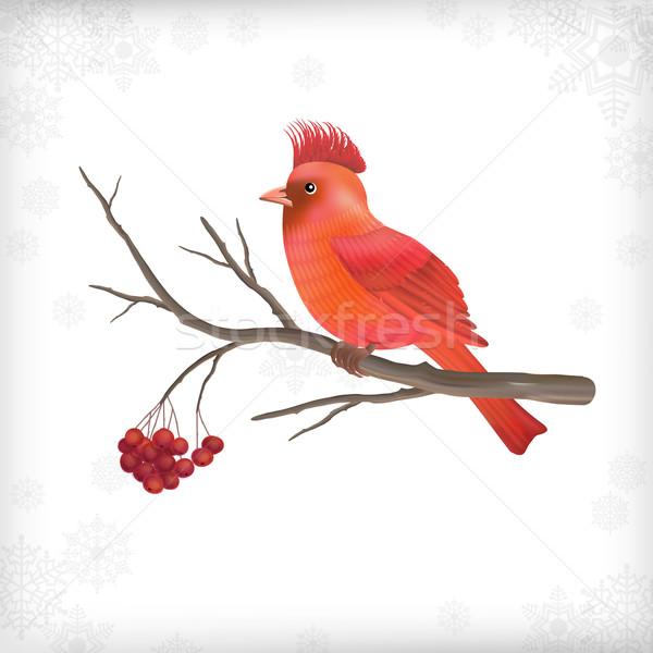 Winter Christmas Bird Rowan Tree Branches Stock photo © kostins