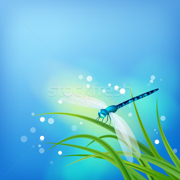 Dragonfly on Grass Blade Stock photo © kostins