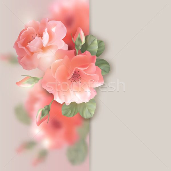 Card with flowers roses  Stock photo © kostins