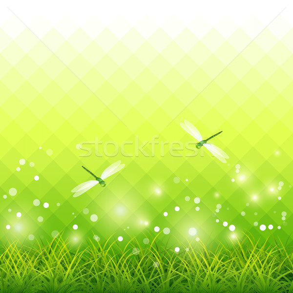 Grama verde libélula temporada vetor verde grama Foto stock © kostins