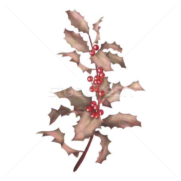 Holly watercolor branch with berries Stock photo © kostins